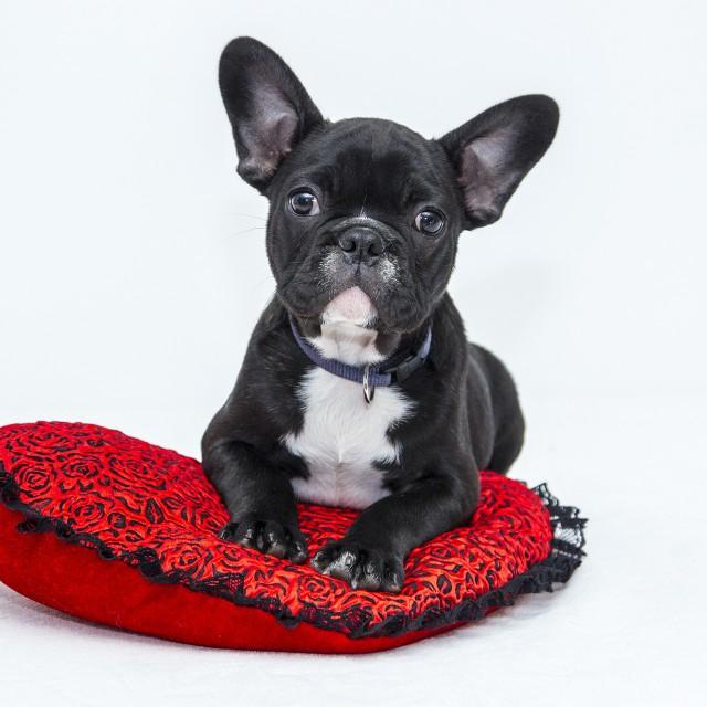 犬の心臓病ってどんな病気?