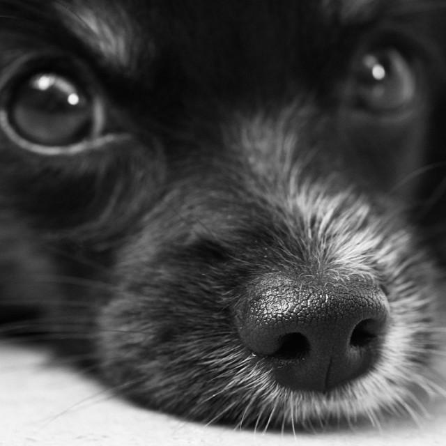 あなたのワンちゃんはどのタイプ?愛犬の性格診断!