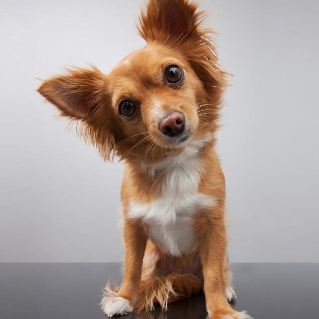 犬のゴハン、何に気をつけたら良いの?