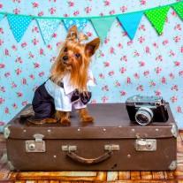 愛犬との旅行/犬種ごとの特徴と宿泊先選び