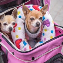 愛犬との旅行で気をつけること/移動