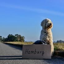 愛犬との旅行で気をつけること/犬のストレスをなくす方法