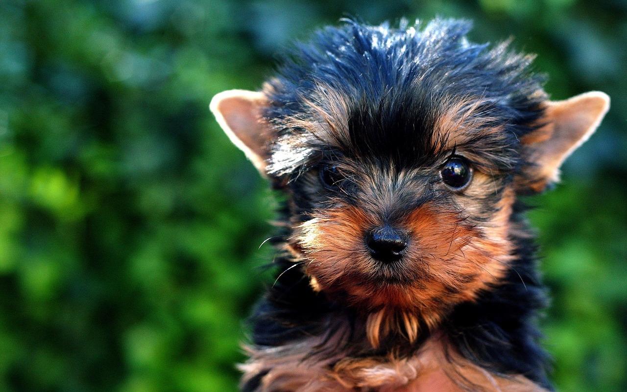 puppy-1239224_1280