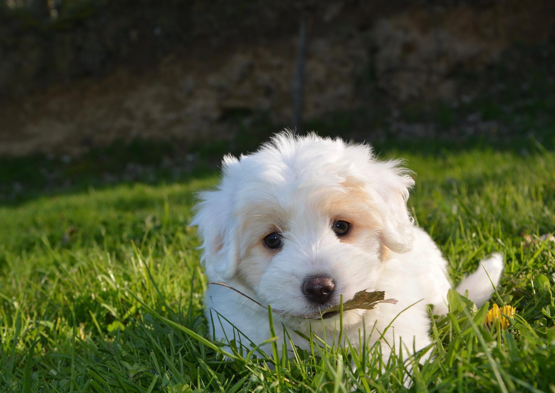 dog-2215158_1920
